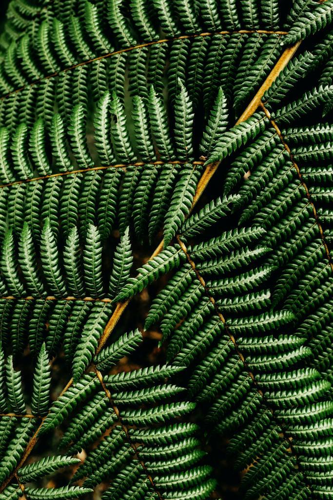 Big Chill Color Spotlight: Fern Green